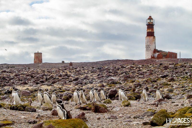 Isla Pinguïno