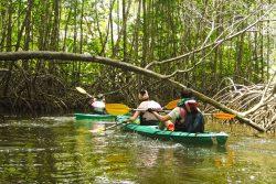 Costa Rica : 8 spots incontournables dans la péninsule d'Osa