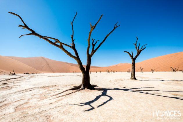 Dead Vlei, Sossusvlei, désert du Namib, Namibie