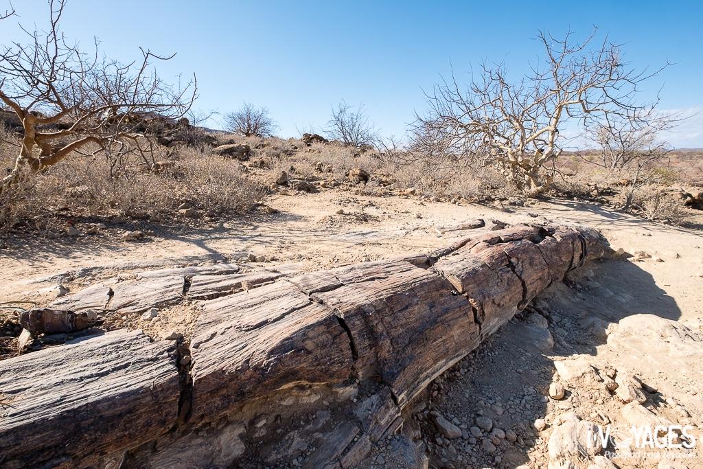 Damaraland, forêt pétrifiée