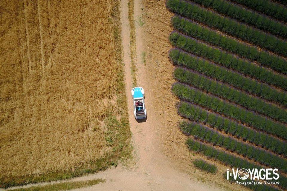 Roadtrip en 2cv sur le plateau de Valensole