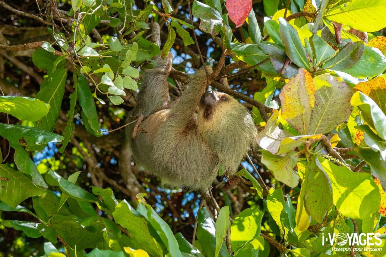 Parc national Manuel Antonio, paresseux à 2 doigts