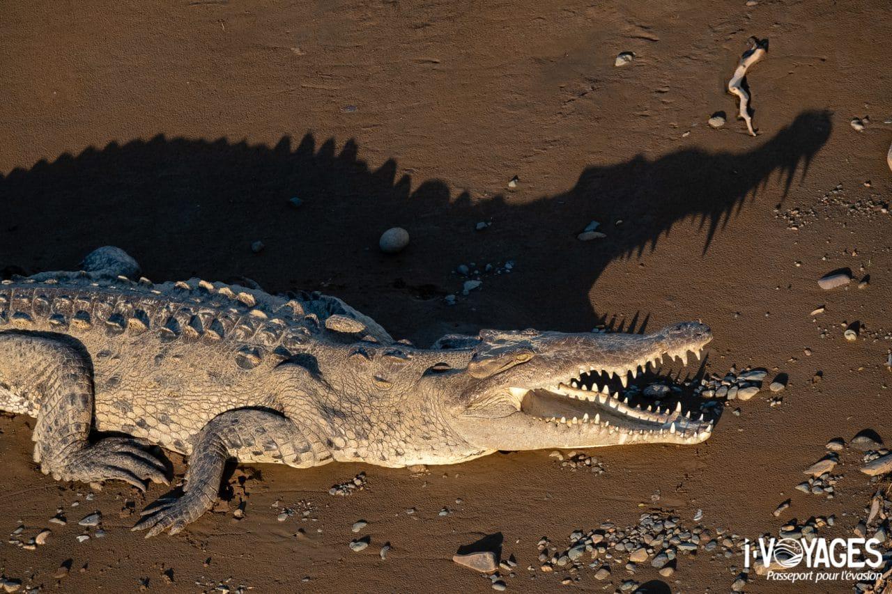 crocodile, pont de la rivière Tarcoles