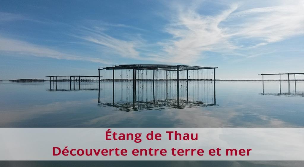 Étang de Thau : découverte entre terre et mer