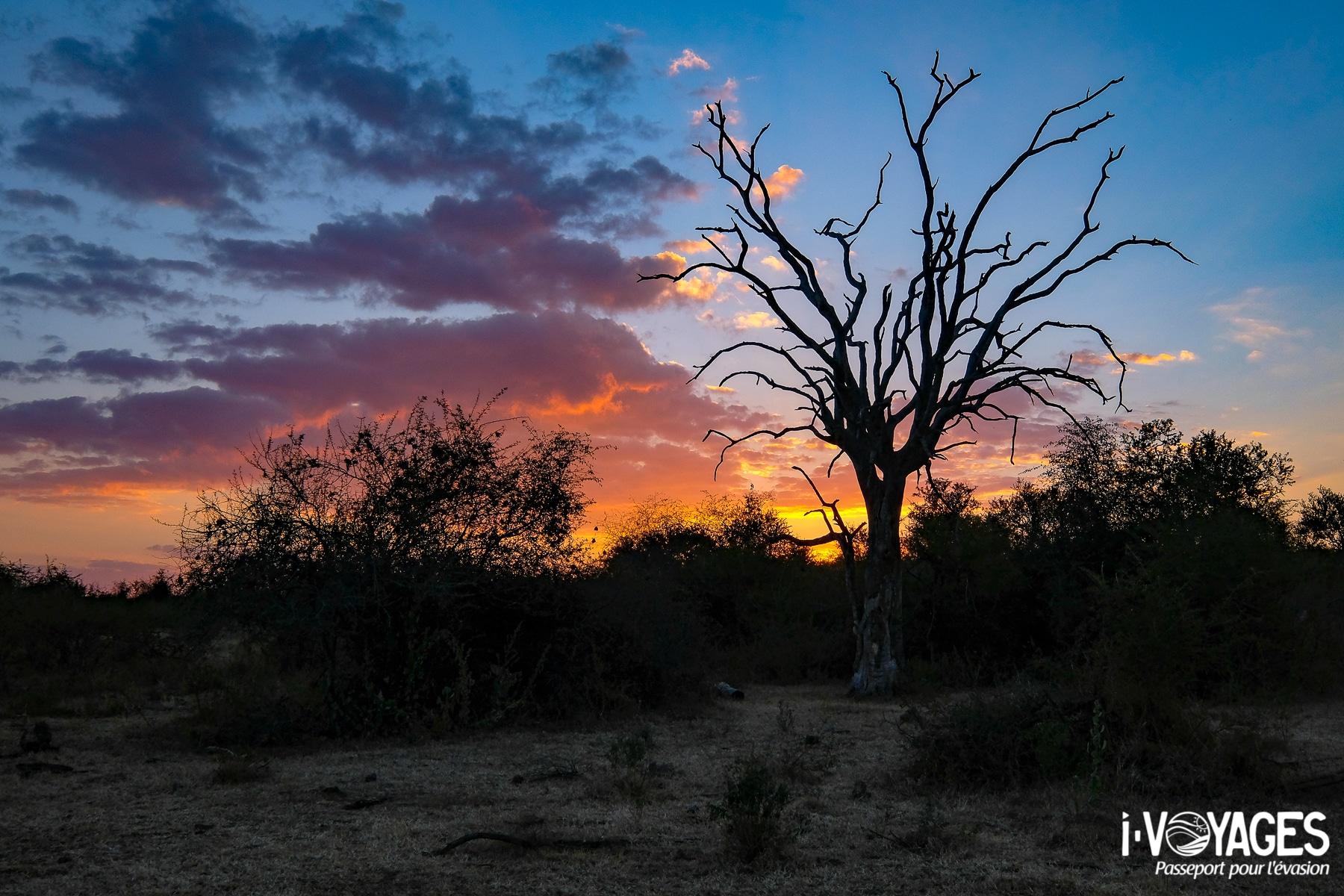 Réserve privée de Madikwe