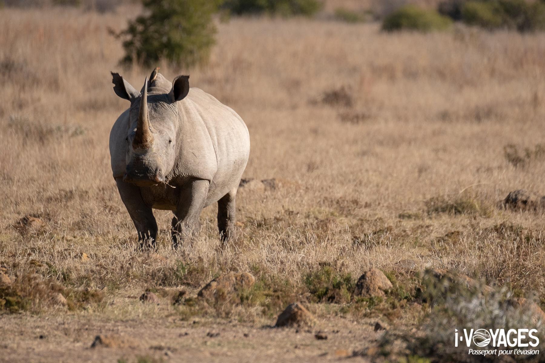 Rhinocéros, Pilanesberg