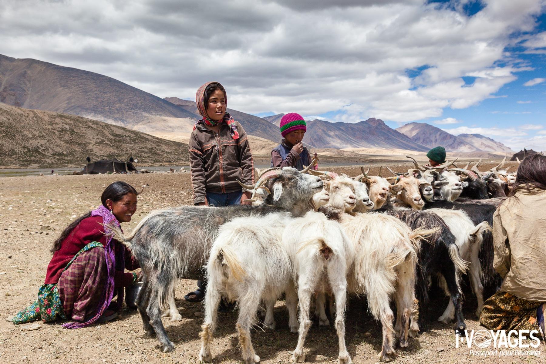 Traite des chèvres