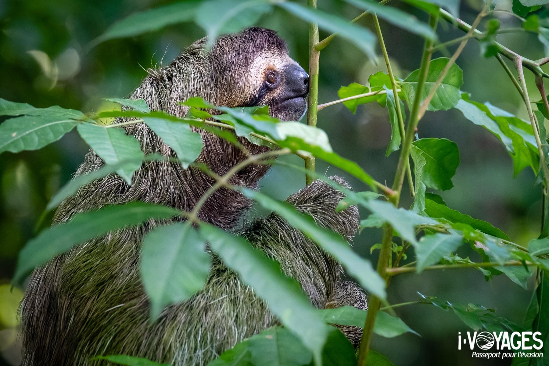 Voir un paresseux, 10 expériences nature à vivre au Costa Rica