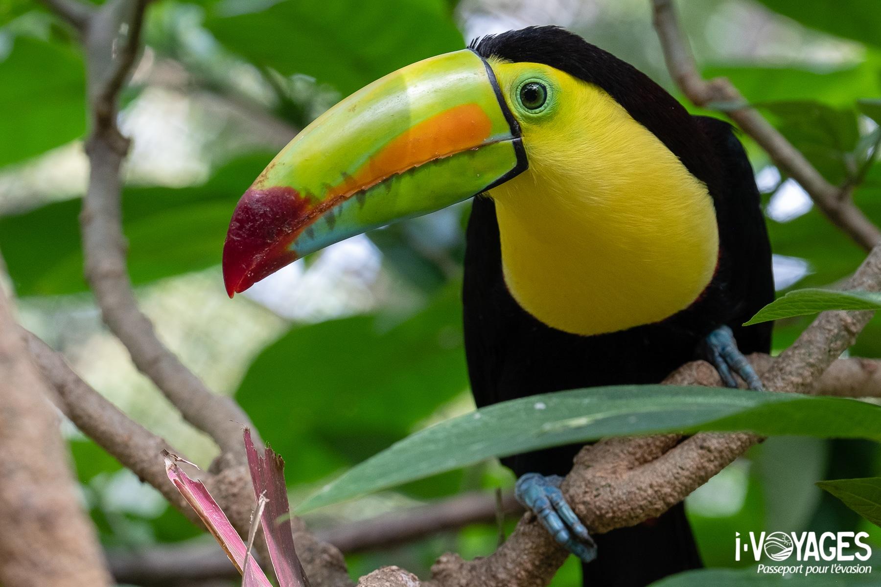 Toucan, 10 expériences nature à vivre au Costa Rica
