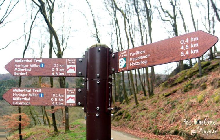 Rochers et forêt dans le Müllerthal près de Berdorf