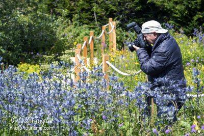 Photographe dans Le Jardin Alpin du Lautaret