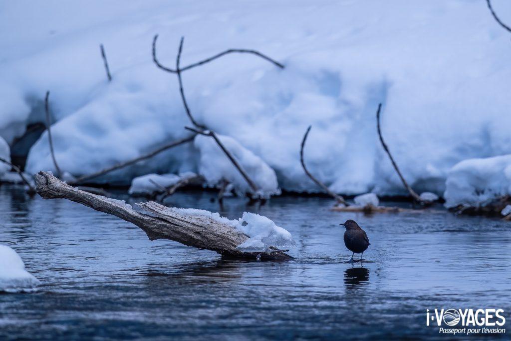 7 activités à faire l'hiver à Hokkaido