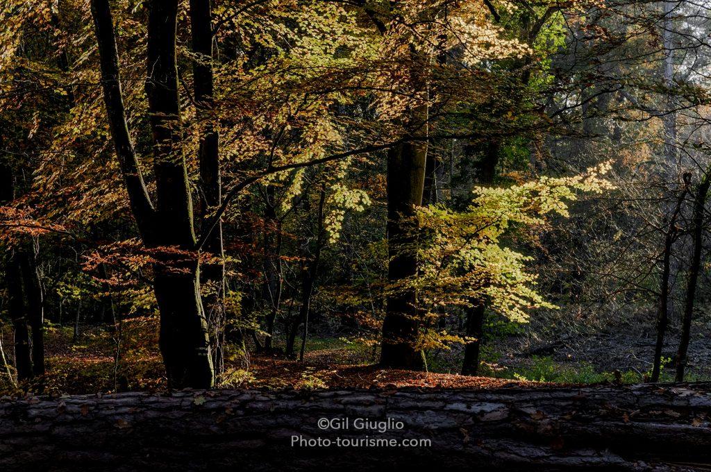 Forêt de Compiegne