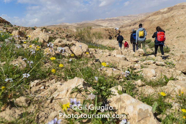 Randonnée dans le désert du Néguev à la Réserve Ein Gedi