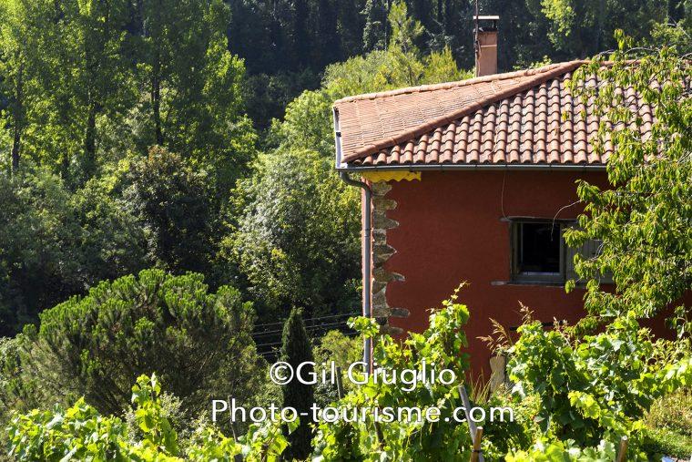 Vignes et maison du Domaine viticole Corps du Loup