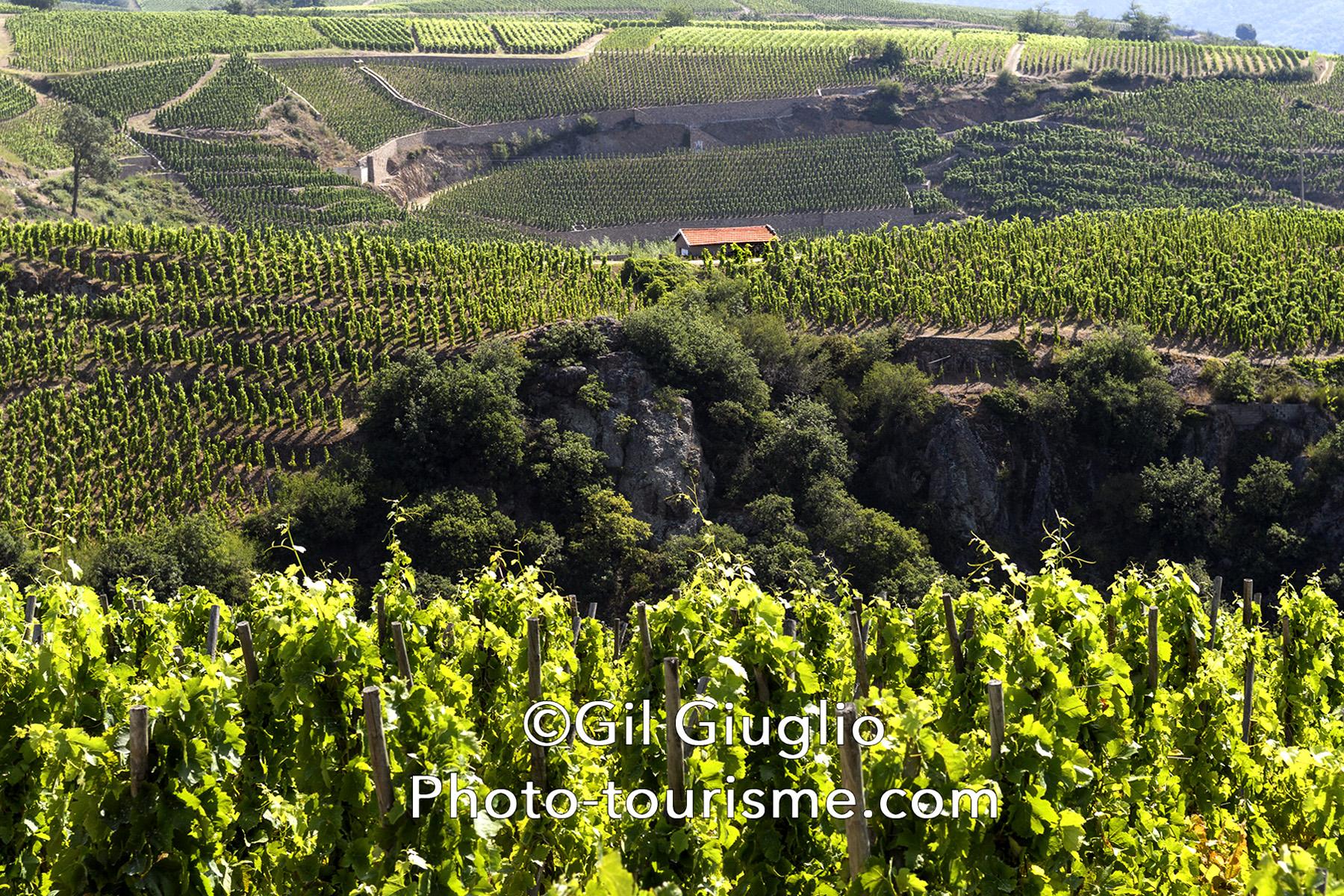 Paysage sur les vignes de Condrieu