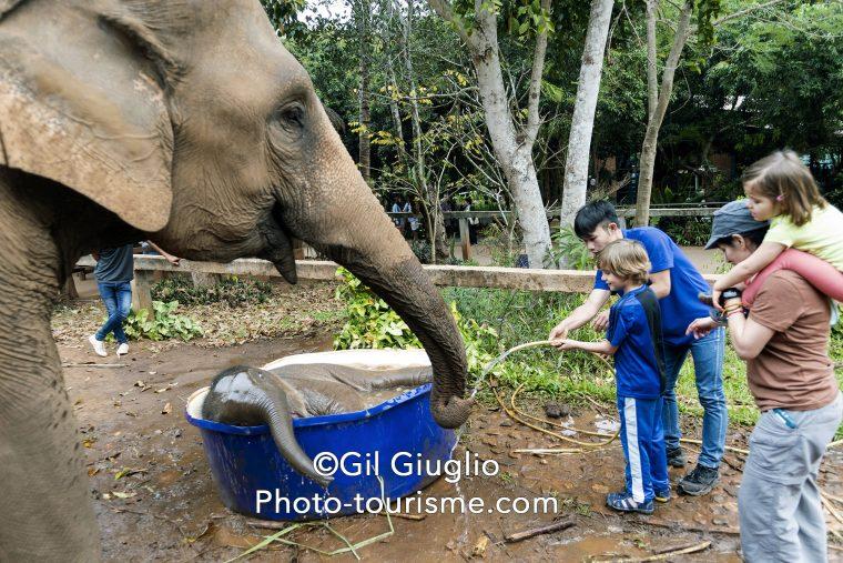 Touristes et bain d'un éléphanteau avec sa mère