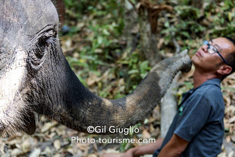 Trompe d'éléphant et mahout