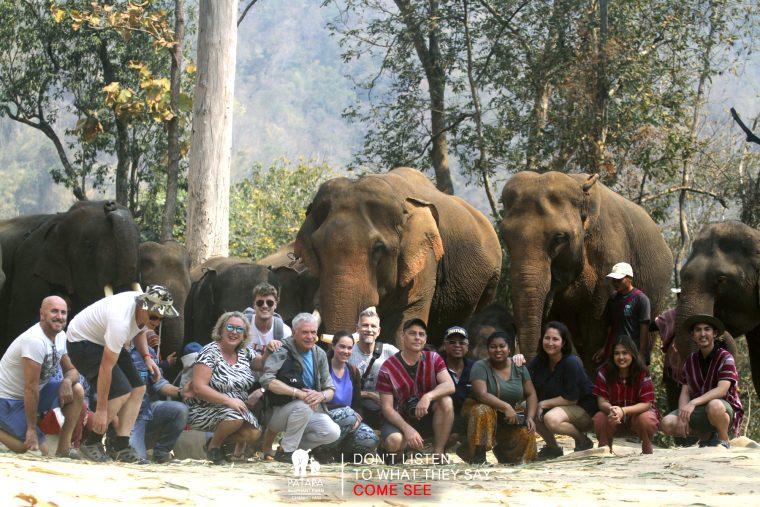 Groupe de touristes devant troupeau d'éléphants