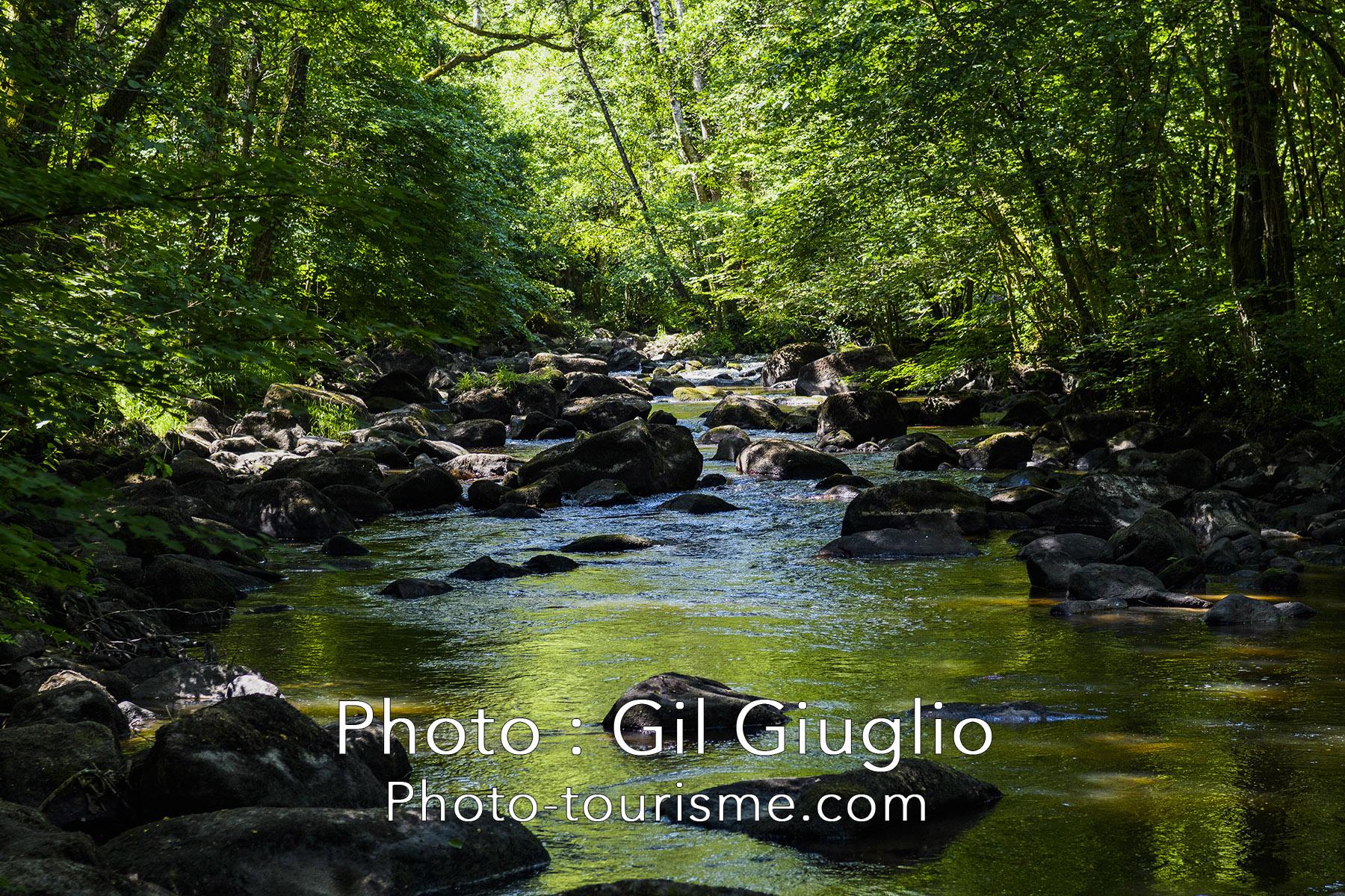 La rivière Rouvre sous les sous bois