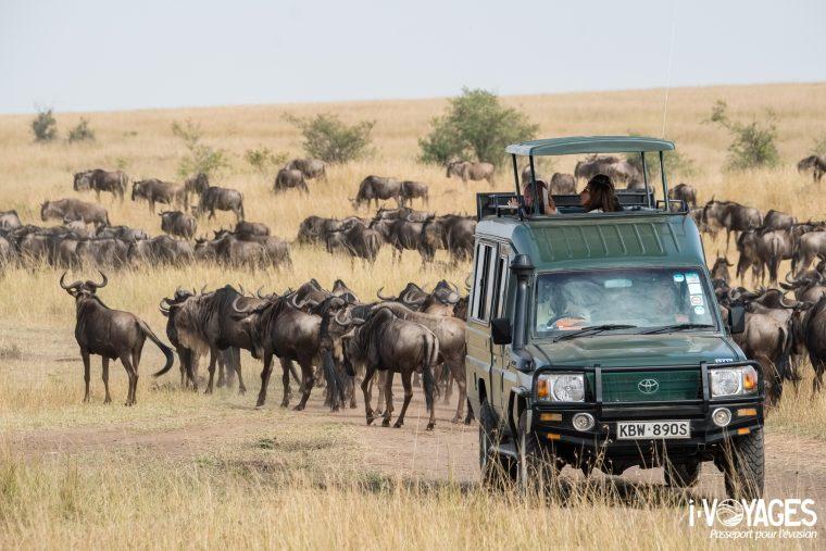 Migration des gnous, Masaï Mara