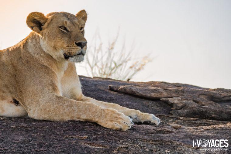 Lionne, Masaï Mara