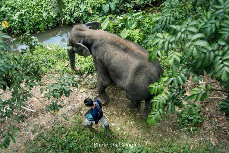 Mahout et son éléphant vue de dessus