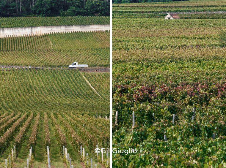 Montage de deux photos avec paysage climats de Bourgogne