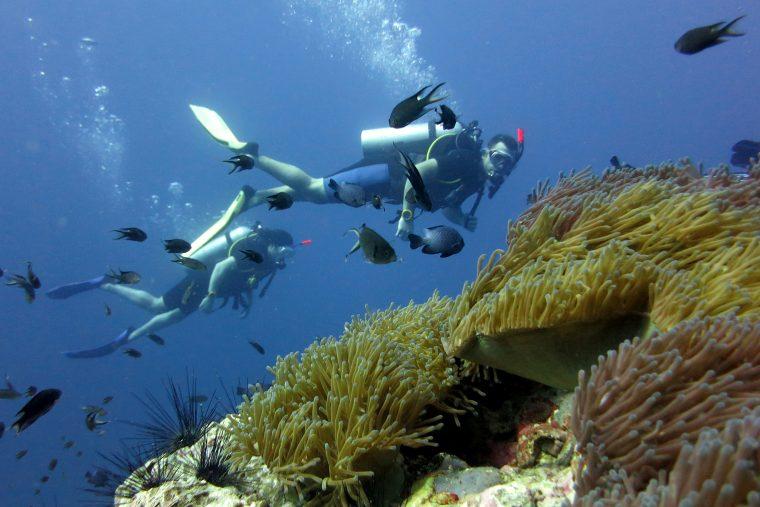 Plongée sous marin à Koh Tao, Thaïlande