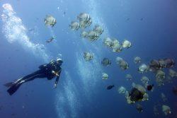 Réaliser ses rêves de plongée à Koh Tao en Thaïlande