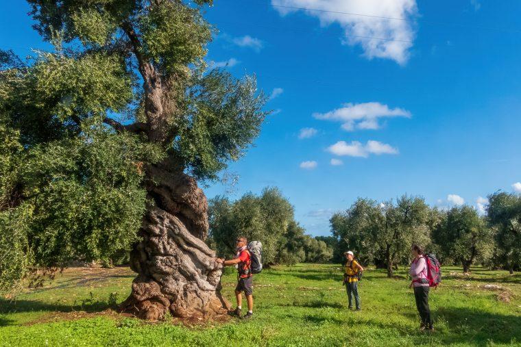 masserie, Puilles du Sud, Italie
