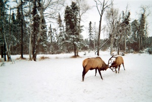 Zoo de Félicien
