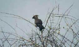 bird5.JPG (22753 octets)
