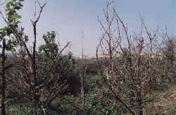 westhoek1.JPG (26031 octets)