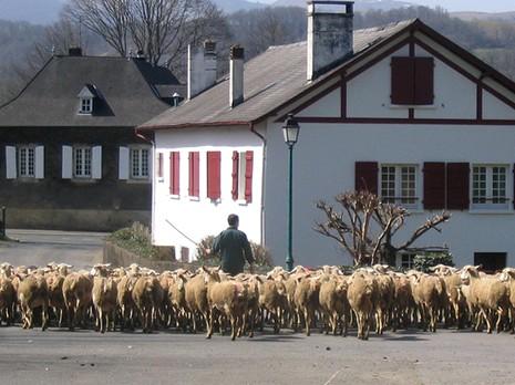 Transumance au Pays Basque FLICKR Frédérique PANASSAC