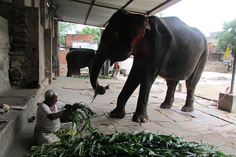 Les éléphants de la fée Viviane