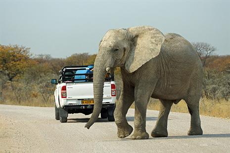 4x4 et éléphant