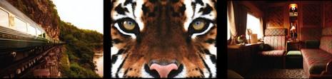 orient express: préservation des tigres