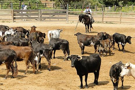 L'Andalousie est la terre des taureaux les plus braves.
