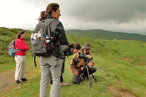 Le col de Soulor et ses environs sont propices à l'observation des oiseaux. Orchidées et autres plantes y foisonnent.