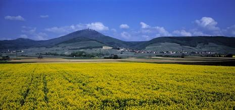 Alsace © CRTA/Zvardon