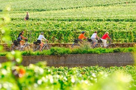 Vignoble Vougeot - © Alain Doire/Bourgogne Tourisme