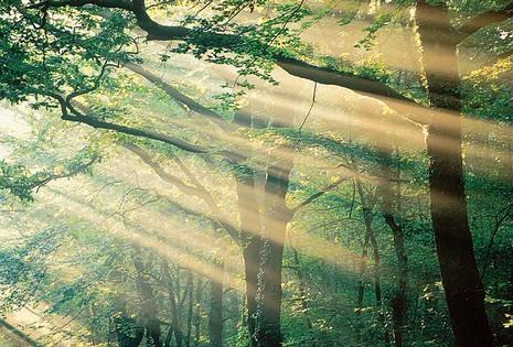 Forêt de Brocéliande  © CRT Bretagne