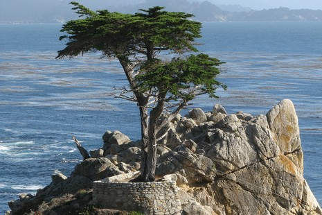 Lone Cypress - Carmel - Crédit Photo Kevin Rush Forth - Flickr.com