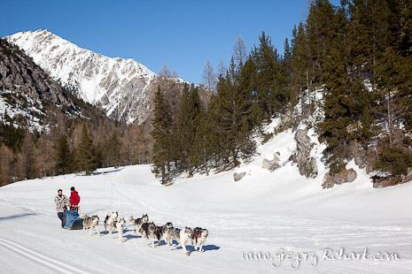 Traîneau à chiens - vallée de la Clarée