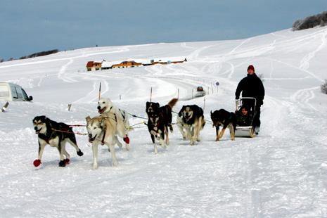 Jura : chiens de traîneau- © CRT Franche Comté