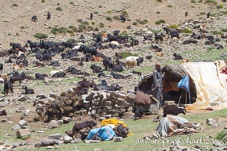 Campement nomade sur le plateau d'Izourar