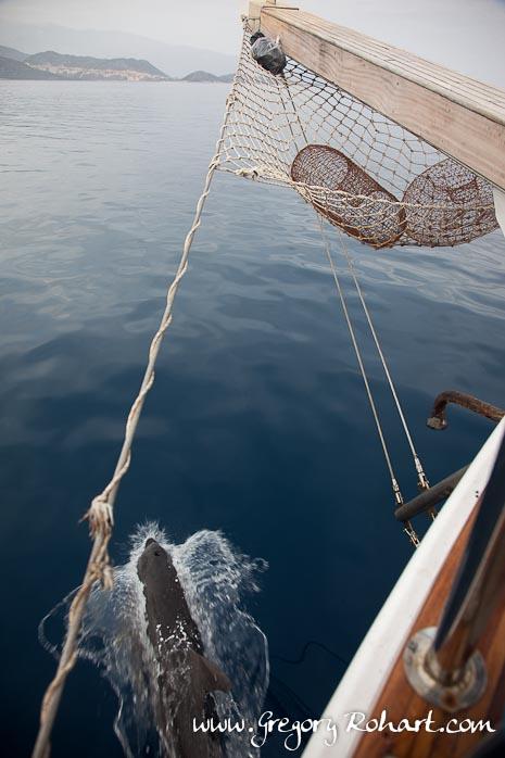 Nage avec un dauphin