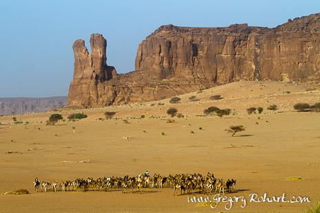 Caravane de dromadaires dans l'Ennedi