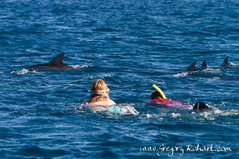 Nage avec les dauphins dans la baie de Tamarin